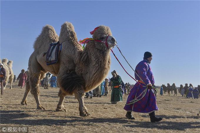 有多少人知道骆驼奶的营养价值