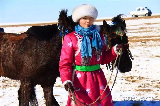 新春佳节话骆驼—内蒙古苏尼特骆驼