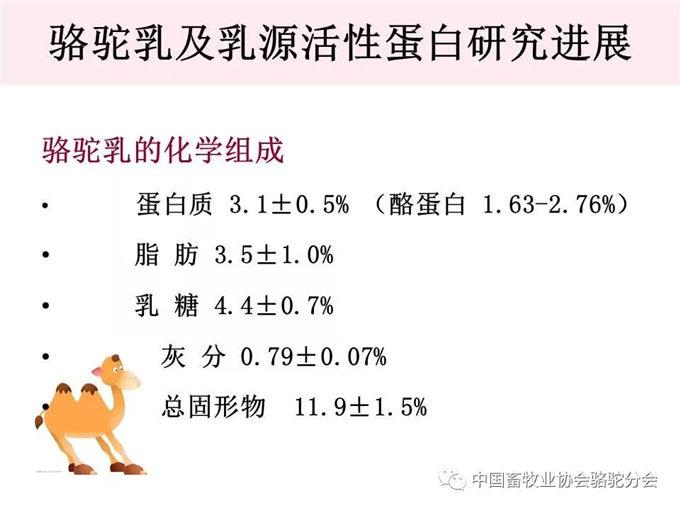 骆驼奶定向研究应用-新疆大学教授 杨洁