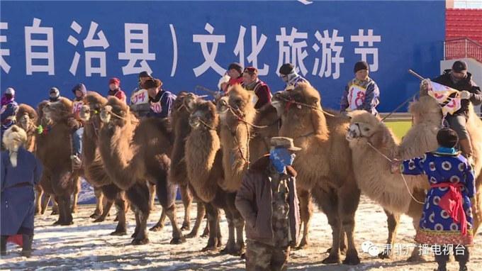 新春佳节话骆驼—甘肃北的骆驼