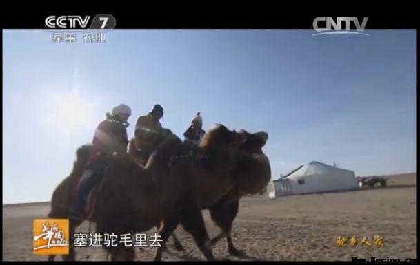 央视美丽乡村行:阿拉善-旺源骆驼奶专卖网