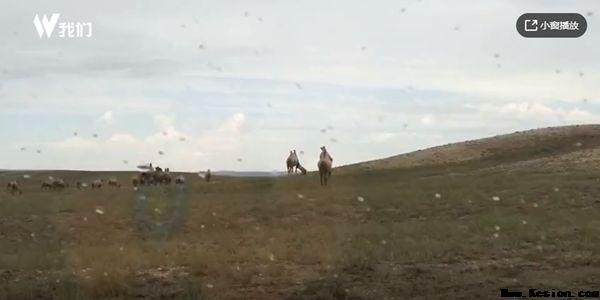新京报记者体验戈壁放-旺源骆驼奶专卖网