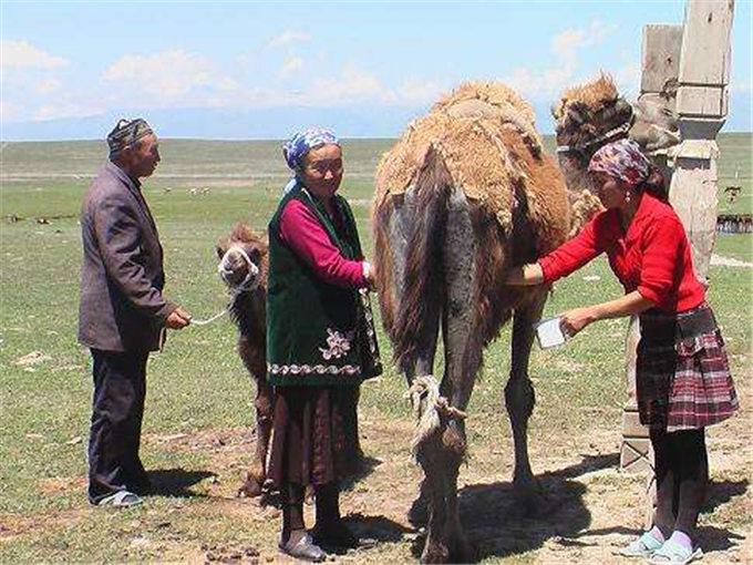 国务院办公厅:推进奶业-旺源骆驼奶专卖网