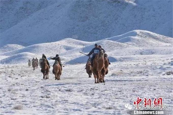 甘肃肃北牧民冬季赛马-旺源骆驼奶专卖网