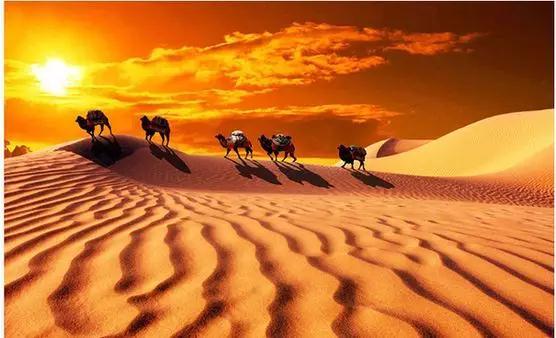 带你详细了解沙漠白金-旺源骆驼奶专卖网