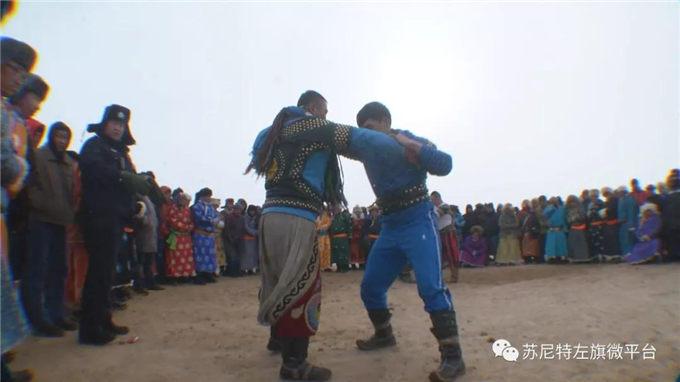 新春佳节话骆驼—内蒙-旺源骆驼奶专卖网