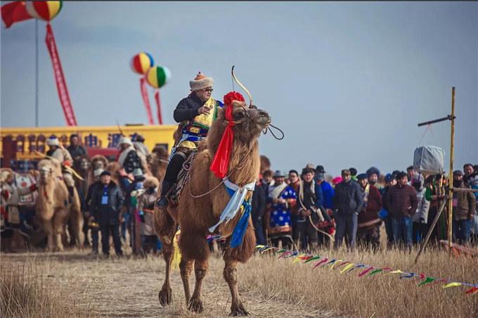 新春佳节话骆驼---青海-旺源骆驼奶专卖网